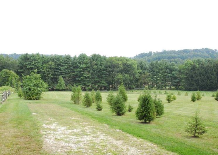 Как бесплатно получить землю под дачный участок от государства?