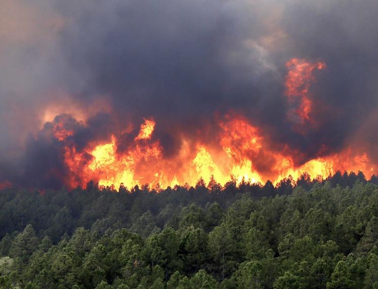 Правила поведения при пожаре в лесу